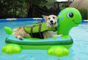 dog on raft AllPaws Facebook