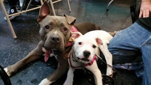 homeless-pets-collide-nyc-submitted